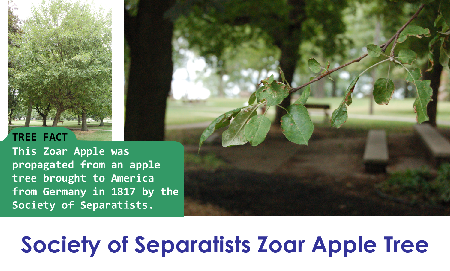 society of Separatists Zoar Apple_thumb.png
