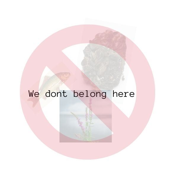 We dont belong here (1)canva